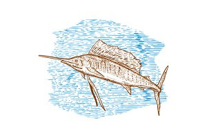 Sailfish Fish Jumping Sketch