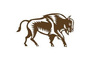 American Bison Woodcut