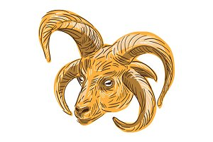 Manx Loaghtan Head Drawing