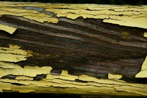 Old yellow paint on the wood
