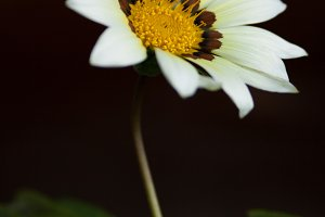 White flower on the dark background