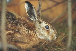 Lonely rabbit