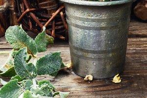 Medicinal plants and mortar