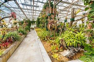 Many green plants