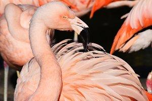 Pink Pelican - 40% OFF