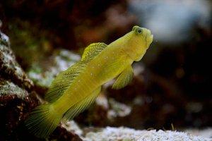 Fish photo, saltwater fish