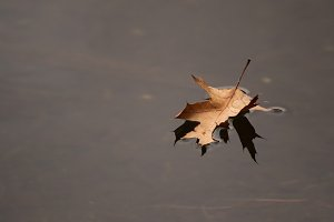 Fall photo, leaves, leaf on water