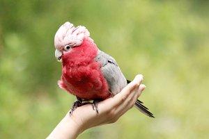 Parrot photo, parrot in hand, bird