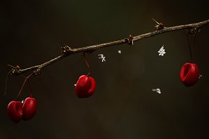 Winter berries and snowflakes photo