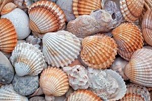 Shells macro shot