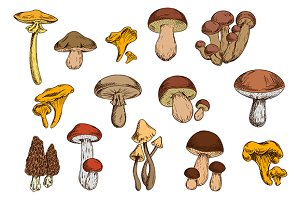 Organic mushrooms vector set