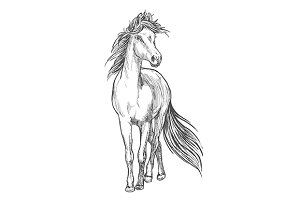 Standing horse pencil sketch