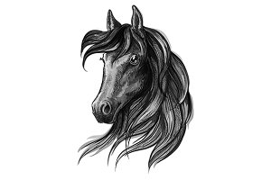 Horse head pencil sketch