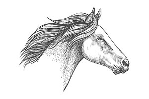 White horse pencil sketch