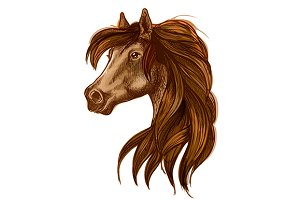Brown horse head