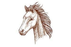 Mustang horse pencil sketch