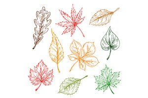 Color sketches of tree leaves
