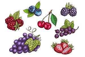 Hand drawn berries set