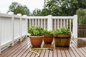Home Herb Garden on Patio