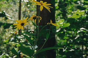 Yellow flower in the forest