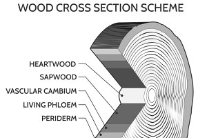 Wood cross section scheme