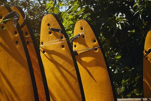 Yellow surfboards among trees
