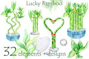 Lucky Bamboo - watercolor clipart