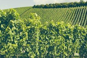 bio farming yineyards