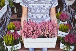 Magenta flowers in wood box