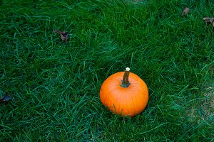pumkin in green grass
