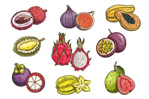 Tropical and exotic fruits sketches