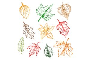 Red, yellow, brown and green leaves