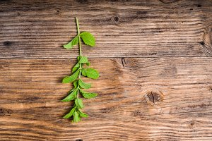 Mint herb on wooden table
