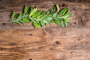 Sage herb on a table