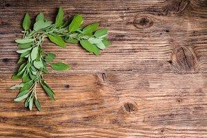 Fresh variegated sage