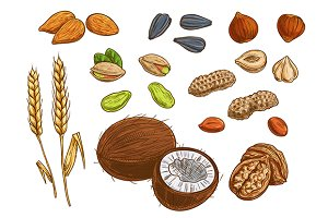 nuts grains and seeds color sketches