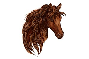 Brown horse with wavy mane