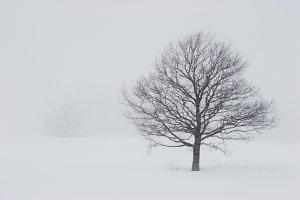 Snowfall. Winter