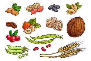 Nuts, grain, kernels and beans