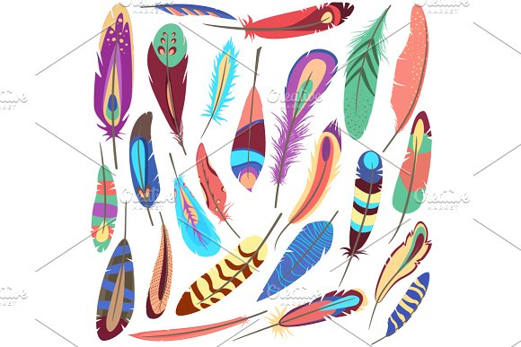 Set of bird fluffy feather