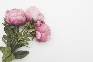 Pink flower header/hero image