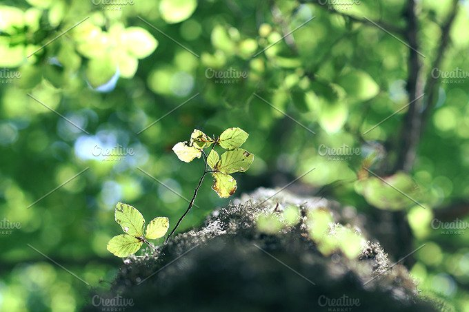 Leaves on a mountain tree. - Nature