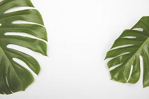 Large green tropical leaf background