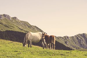 Hills, Grass and Horses