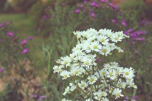 White cutter flower in a garden