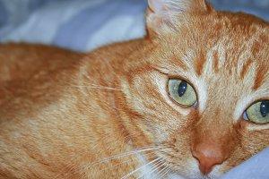 A cat's eyes