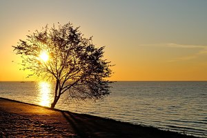 Tree on seaside at sunrise