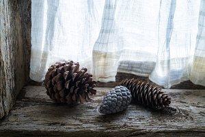 three pinecones