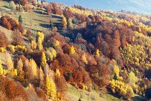 Carpathian mountain autumn panorama.