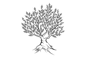 Vector olive tree silhouette